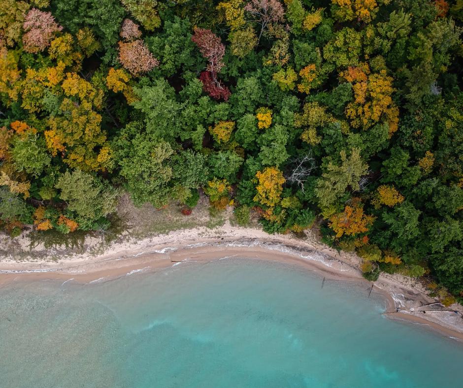 Forêt et mer vue drone