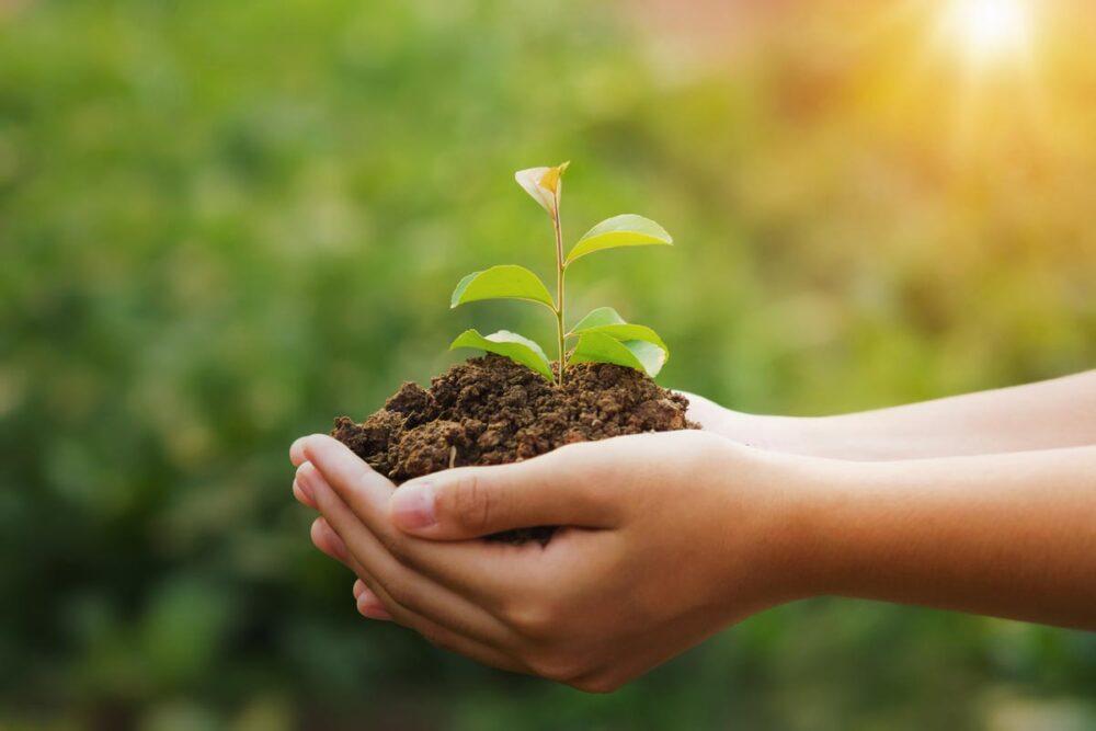 mains tenant une plante croissance saine