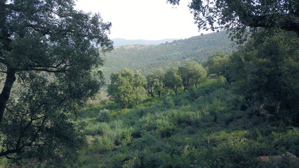 Photo de la forêt de Settara