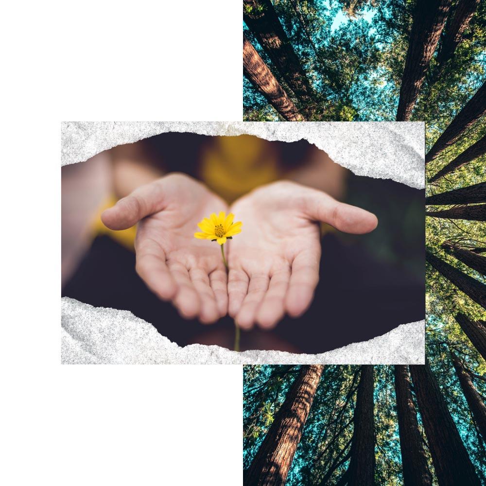 mains tenant une fleur, beauté naturelle